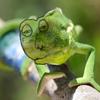 Tears of Chameleon