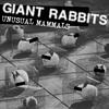 GiantRabbit