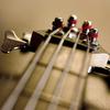 bassist named antony